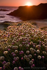 Wildflowers at Mendocino Headlands (Don Smith Photography) Tags: peaceful serenity beautyinnature
