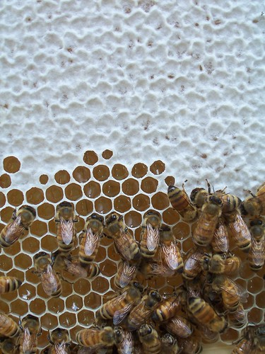 a closeup of the capped and uncapped honey