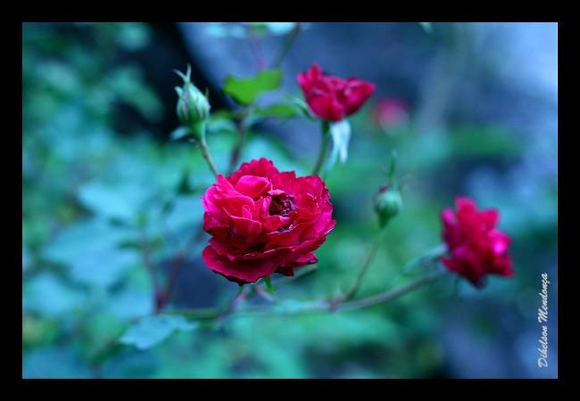 Flor 07