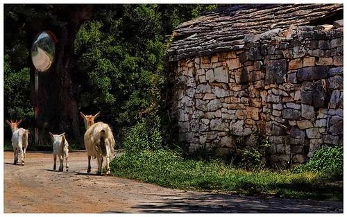 Recorridos en la Península de Istria