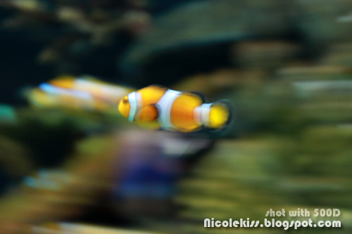 fast clown fish