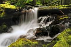 Panther Creek (Darrell Wyatt) Tags: water waterfalls anawesomeshot