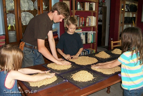 Soaking and sprouting grains - get the kids involved!
