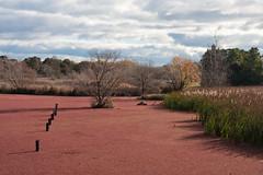 Jerrabombera Wetlands (oz_lightning) Tags: nature water ecology landscape weeds australia wetlands canberra botany act canonef24105mmf4lisusm canon40d
