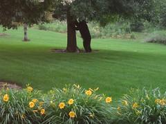bearmadison2
