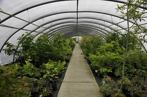 Gossler Farms greenhouse