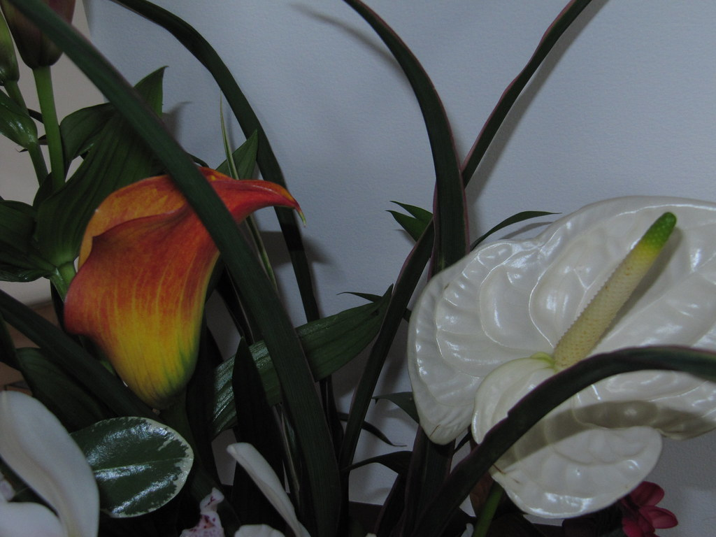 Anthurium and Calla Lily