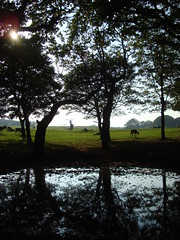 Pond (notFlunky) Tags: park trees shadow reflection silhouette liverpool landscape silhouettes safari knowsley merseyside nttls