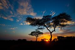 Serengeti Sunrise (hbp_pix) Tags: africa canon tanzania lion giraffe serengeti hyena breathtaking serengetti 50d naturepoetry hbppix platinumphoto theunforgettablepictures breathtakinggoldaward bestcapturesaoi breathtakinghalloffame tripleniceshot elitegalleryaoi mygearandmepremium mygearandmebronze mygearandmesilver mygearandmegold mygearandmeplatinum mygearandmediamond dblringexcellence tplringexcellence eltringexcellence