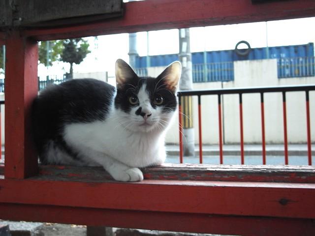 Today's Cat@2010-10-28
