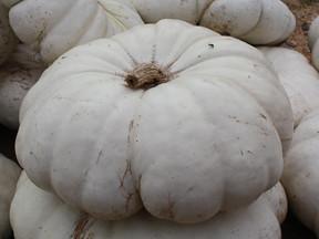 Flat Squashed White Pumpkins