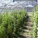"""greenhouse2 • <a style=""""font-size:0.8em;"""" href=""""http://www.flickr.com/photos/52479745@N06/5126527994/"""" target=""""_blank"""">View on Flickr</a>"""