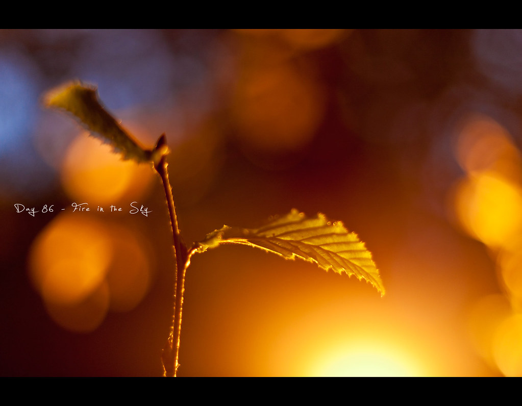 Project 365, Day 86, 086/365, Bokeh, Strobist, flair, light, woods, shiny, glowing, leaves, split, sun, sunlight, warm, CTO, blue, twigs, twig, ourdailychallenge