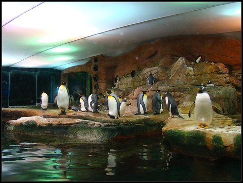 Pingüinos Selwo Marina