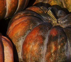 Harvest 4 (Renee Rendler-Kaplan) Tags: november autumn food macro fall gbrearview farmersmarket market kodak harvest vegetable squash kodakeasyshare evanston decor gapersblock wbez 2010 burnished castilla chicagoist evanstonillinois reneerendlerkaplan calabazadecastilla