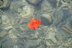 (Mary Notarthomas @NoodleAndBlue) Tags: autumn red orange fall water catchycolors leaf foliage autumnal