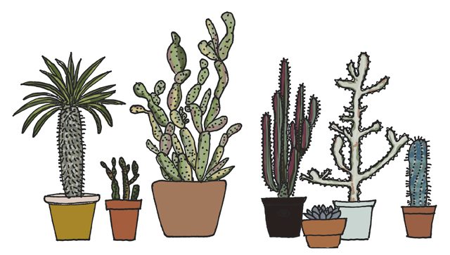 Prickly doodles