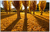 Gold (Antonio Carrillo (Ancalop)) Tags: autumn shadow españa colour tree canon landscape hojas arbol gold spain europa europe sombra paisaje tokina otoño 1224mm albacete nerpio ancalop