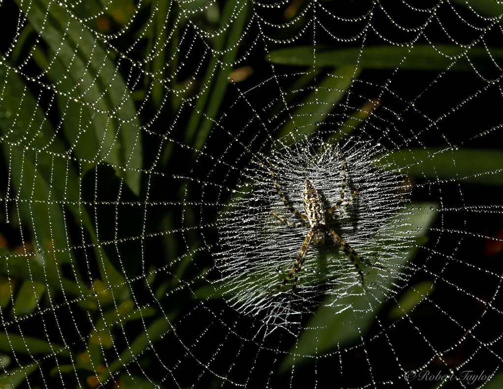 the world u0027s best photos of spiders and usa flickr hive mind