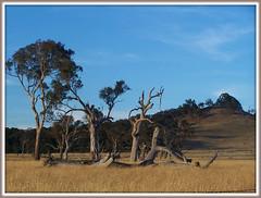 Just off Springrange Rd. (Shortshooter - Al) Tags: trees grass rural landscape trueblue sweep gamewinner herowinner tbaakcg