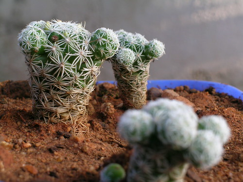 The cactus land