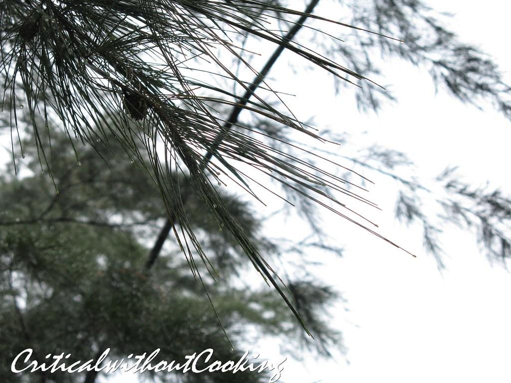 Bagan Lalang