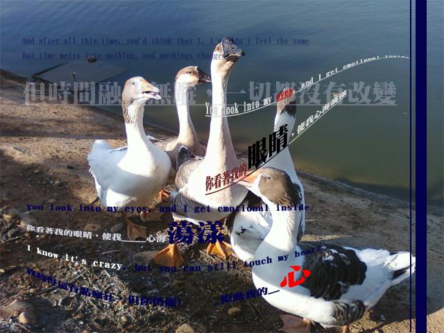 http://farm5.static.flickr.com/4036/4248279974_70723e2f11_o.jpg