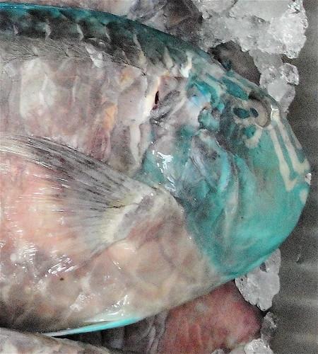 parrotfishface