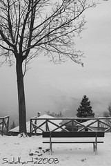 Belvedere di Superga (**Siddharta**) Tags: italia sony neve alpha albero freddo paesaggio superga panchina