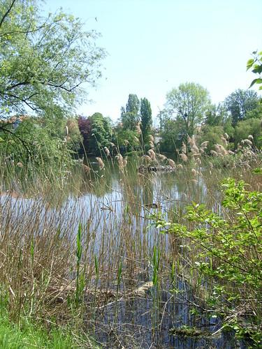 Naturbelassener See