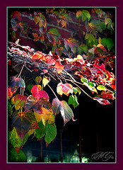 Hanging Colors (Marcie Gonzalez) Tags: ocean california lighting county autumn windows light red orange building brick green fall beach window colors leaves wall canon photography coast daylight town leaf colorful day pacific bright bricks visit location southern coastal cover shore shade greens beaches destination hanging laguna gonzalez oc reds shores towns marcie shading covering marciegonzalez marciegonzalezphotography