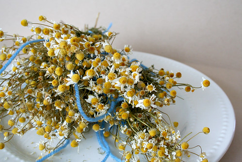 chamomile_dried