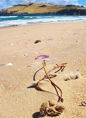 clifton beach drift and shells