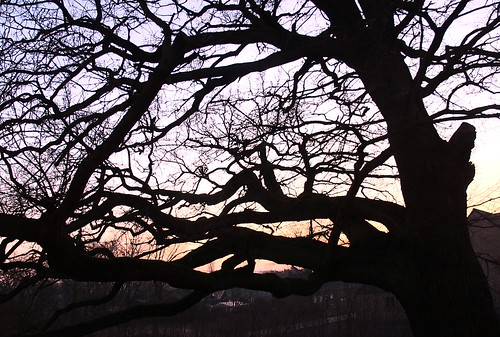 Eik in de schemering - Oak in evening sky
