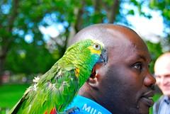 Friend (croji) Tags: portrait pet bird closeup nose eyes beak parrot ear shoulder blackguy greenparrot manandbird colorfulparrot