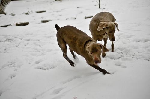 running pups