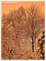 Quiescence / Téli Álom II. (FuNS0f7) Tags: winter hungary budapest sonycybershotdscf828 colorphotoaward