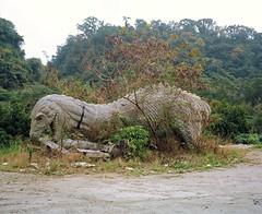 Fall Of The Dinosaurs (deepstoat) Tags: charity colour 120 film earthquake taiwan roll deepstoat charityauctionprintjapan