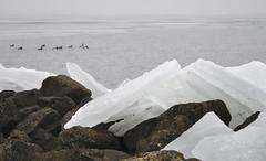 Kruiend ijs ijsselmeer (johan wieland) Tags: winter ice ijsselmeer 2010 ijs kruien kruiendijs