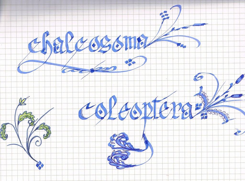 Calligraphy Practice Killing Jar Studio Tags Art Illustration Sketch Journal Sketchbook Lettering Draw