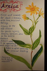 Arnica Remedy Profile