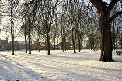 Sneeuw in een Brabants dorp - Snow in een Dutch village (RuudMorijn-NL) Tags: trees light sun sunlight snow holland netherlands dutch licht bomen village sneeuw nederland zon dorp zonlicht noordbrabant denhout houtseheuvel