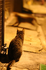 night (Danny Chou) Tags: street night cat photography voigtlander epson nokton  rd1  50f11  50f11