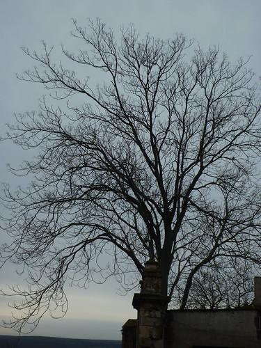 melancolia del árbol en invierno