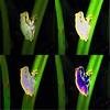 Mutazioni - Ila intermedia (robivet) Tags: veterinarifotografi