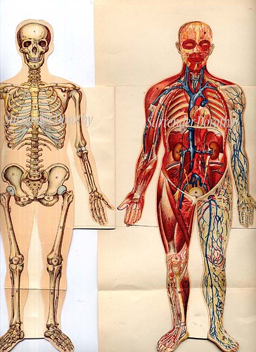 Human anatomy pictures