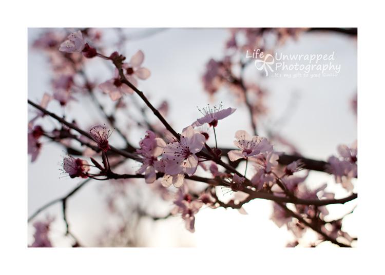 Feb1310_0053ew
