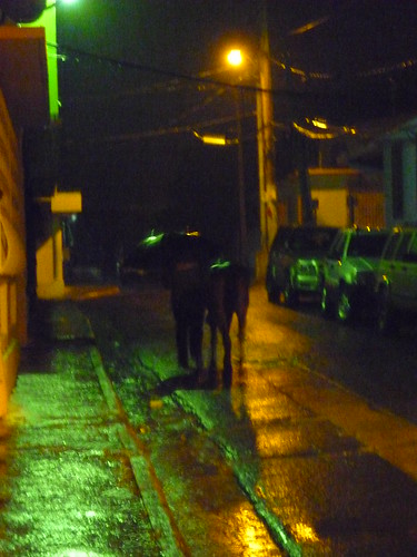 A man and his horse walking home in Isabel Segunda, Vieques