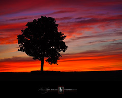 Last Light (Loren Zemlicka) Tags: light sunset summer sky tree nature silhouette june wisconsin clouds landscape photography evening photo midwest image dusk picture explore 2009 lonetree fitchburg canoneos5d flickrexplore canonef100mmf28macrousm flickrfrontpage lorenzemlicka