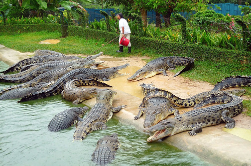 Langkawi Crocodile farm33
